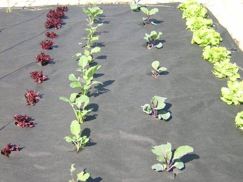 Plant-Protex  Unkrautvlies - 9